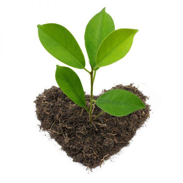 donează pentru plantări