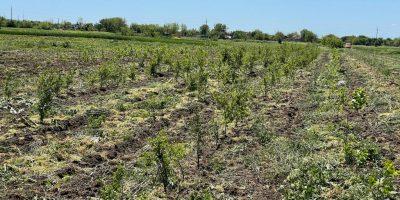 Viitoare perdea forestiera în comuna Bistreț