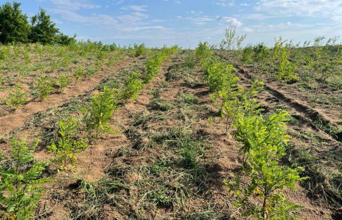 Desertificare in Dolj - reabilitare Celaru